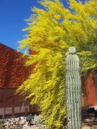 STD Testing Scottsdale, AZ